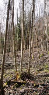 Avec-travaux-forestiers - regeneration-naturelle