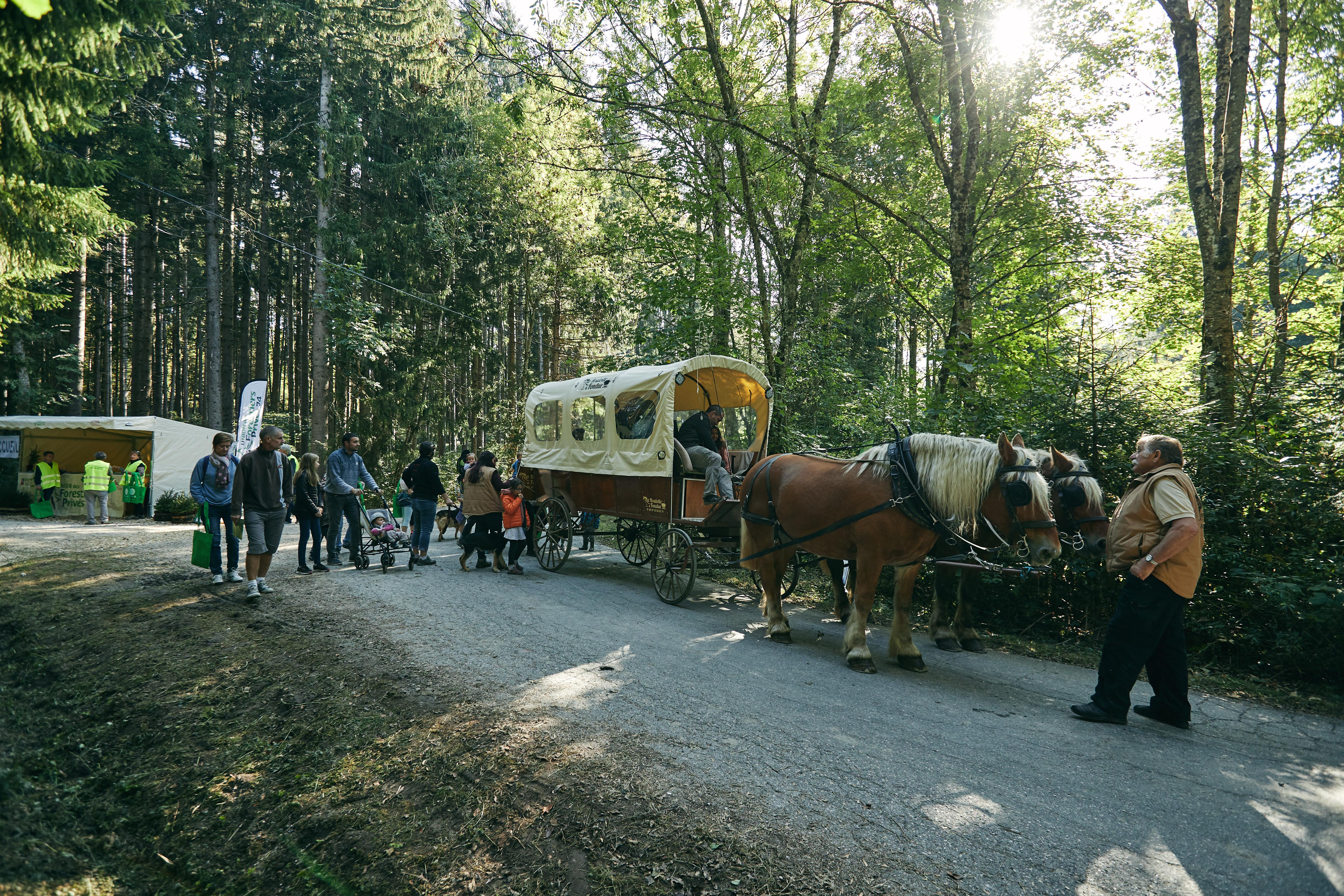 transport des visiteurs en calèche