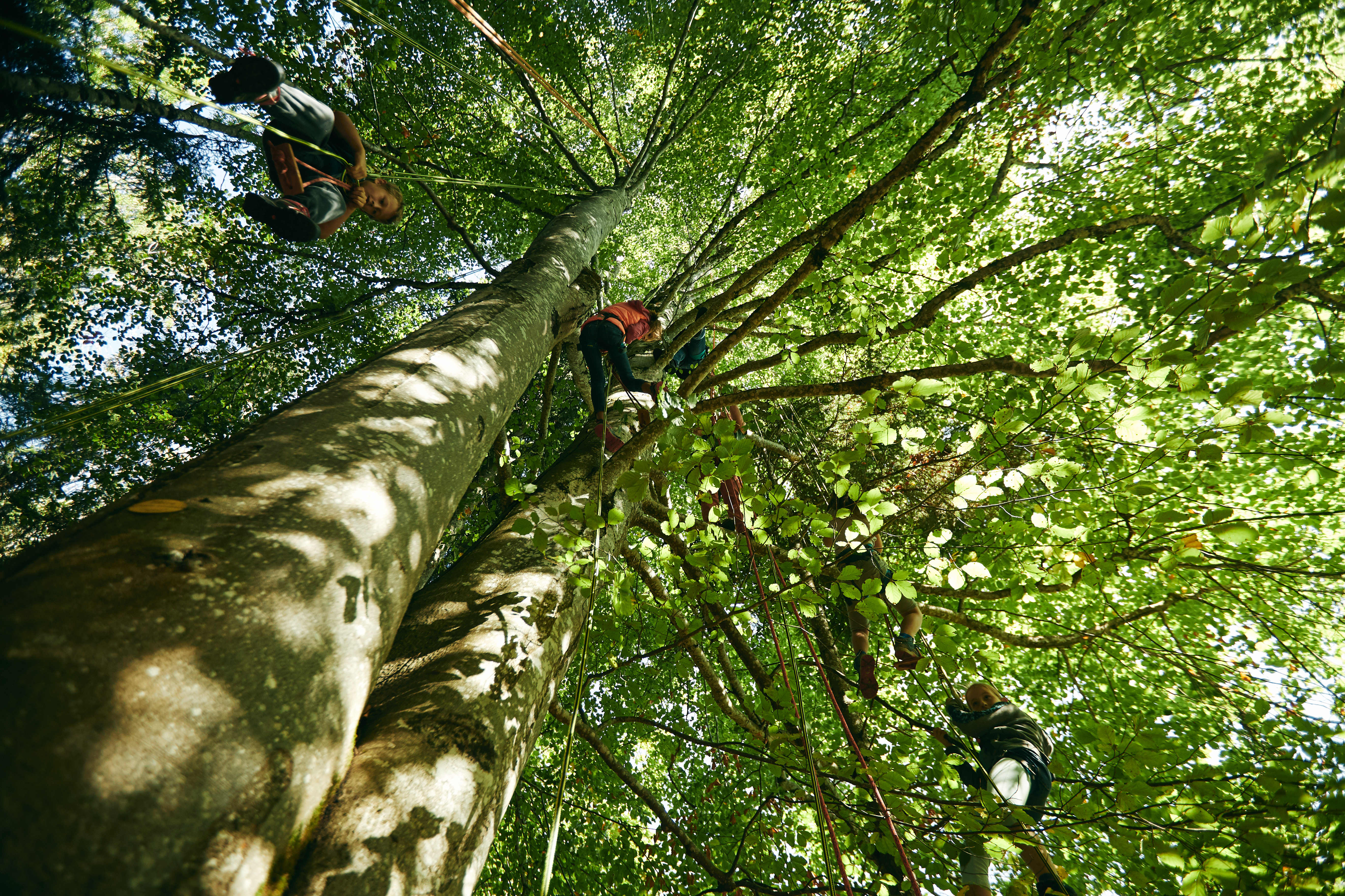 grimp'arbre