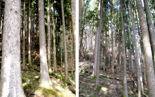 Foret-mure