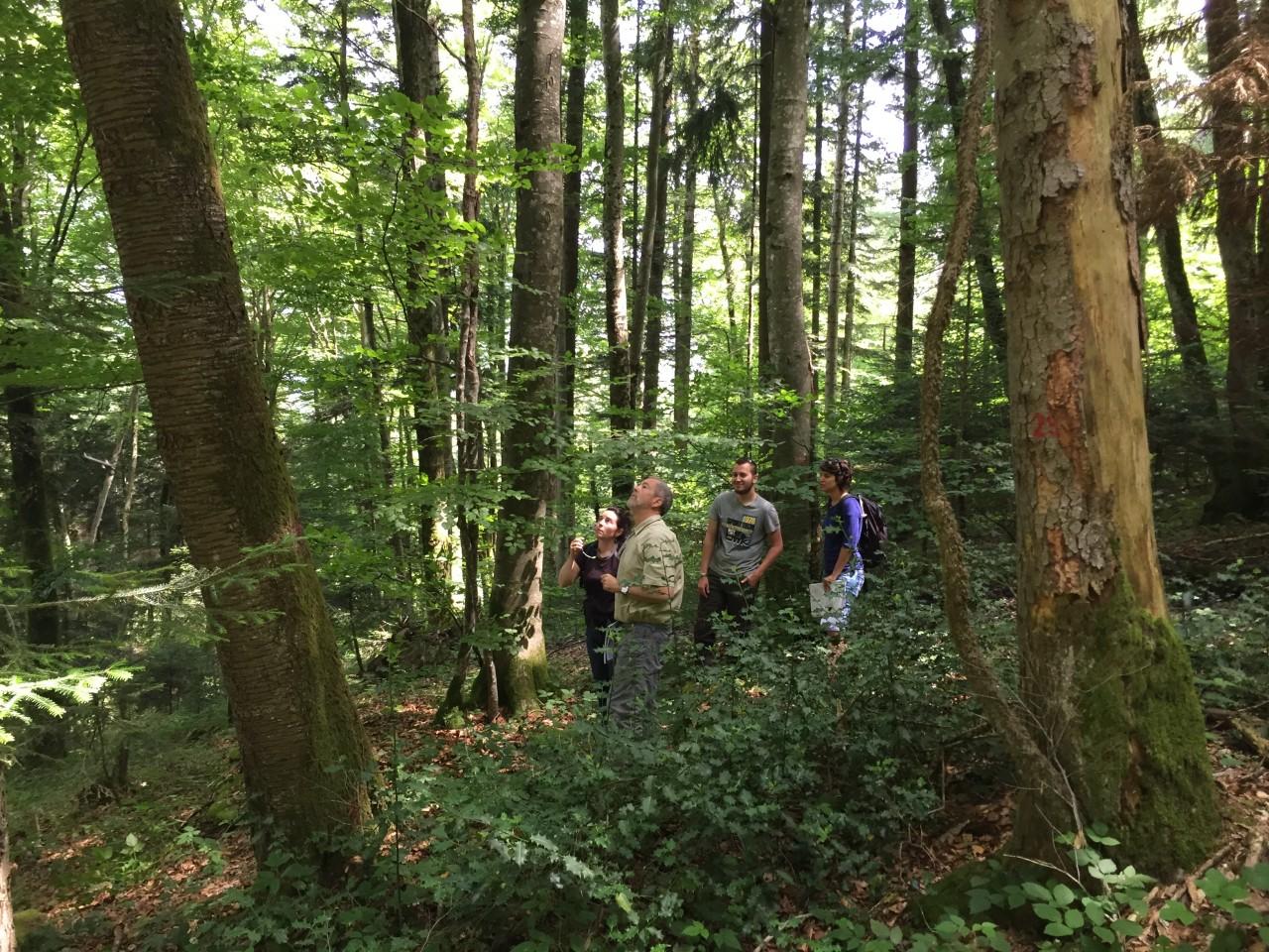 réunion en forêt