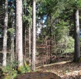 Resultat-Avec-travaux-regeneration--artificielle-Parcelle forestière haute-savoie