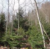 Resultat-Avec-travaux-regeneration--artificielle-naturelle forestière haute-savoie