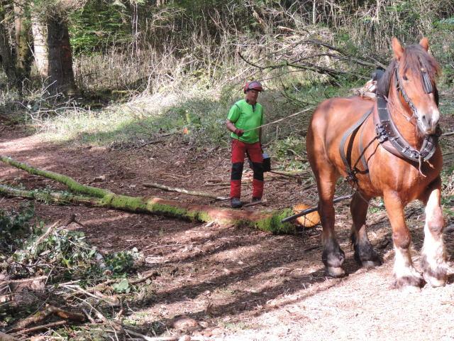 débardage au cheval